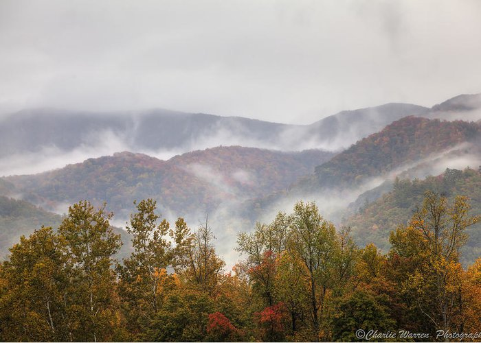 Great Smoky Mountains Greeting Card featuring the photograph Misty Morning I by Charles Warren