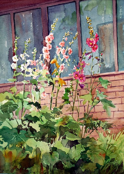 Peter Sit Watercolor Greeting Card featuring the painting Mixed Hollyhock by Peter Sit