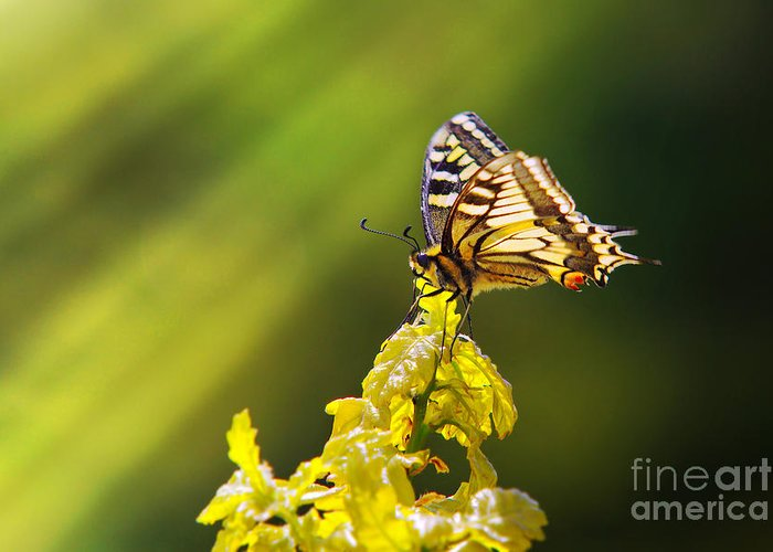 Antenna Greeting Card featuring the photograph Monarch Butterfly by Carlos Caetano