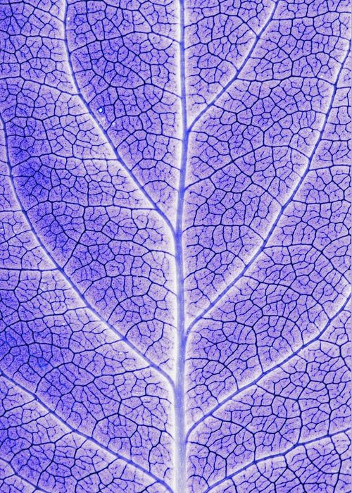 Abstracts Greeting Card featuring the photograph Monotone Close Up Of Leaf by Sean White