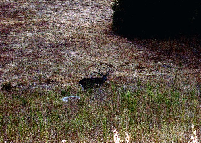 Moonlit Buck Greeting Card featuring the photograph Moonlit Buck by The Kepharts