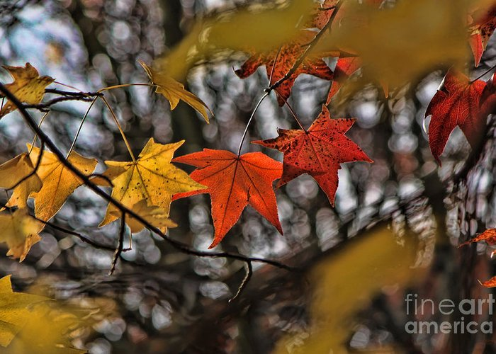 Trees Greeting Card featuring the photograph More Autumn Leaves by Jeff Breiman
