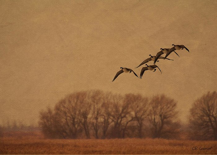 Anatidae Greeting Card featuring the photograph Morning Flight by CR Courson