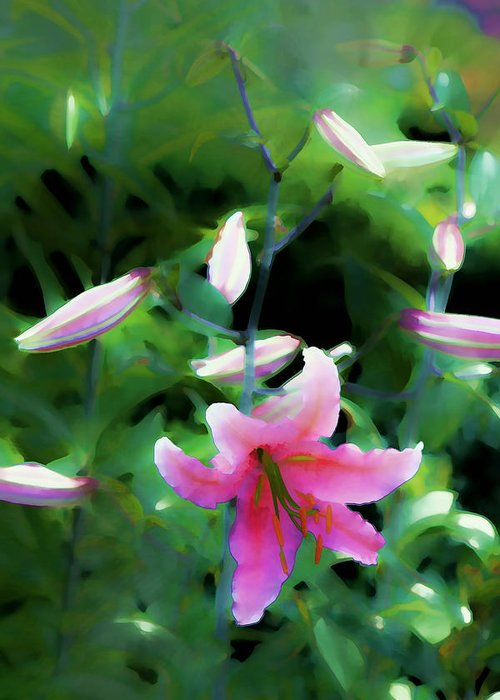 Artistic Photography Greeting Card featuring the photograph Morning Glow by Tom Prendergast