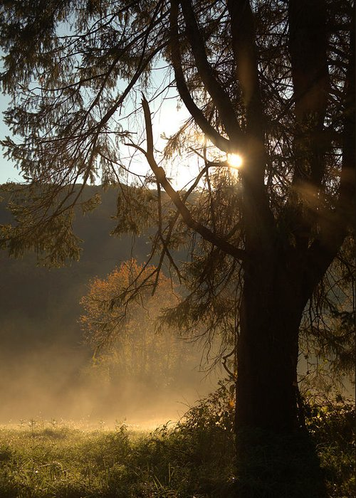 Morning Greeting Card featuring the photograph Morning Has Broken by Karol Livote