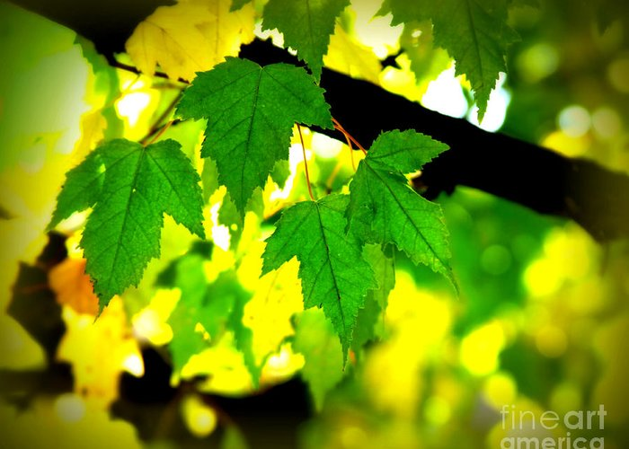 Leaf Greeting Card featuring the photograph Morning Light by Perry Webster