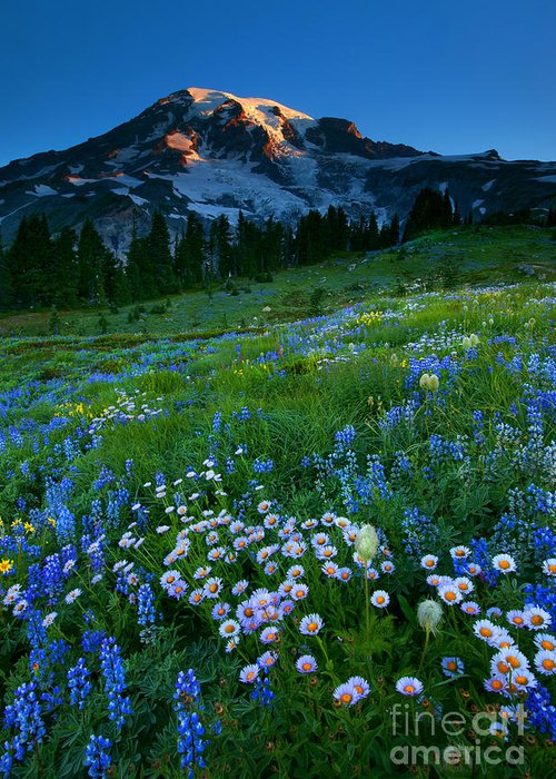 Rainier Greeting Card featuring the photograph Morning Majesty by Mike Dawson