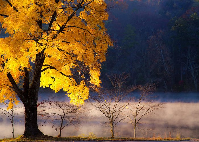 Beaver Lake Photographs Greeting Card featuring the photograph Morning Maple Ll by Rob Travis