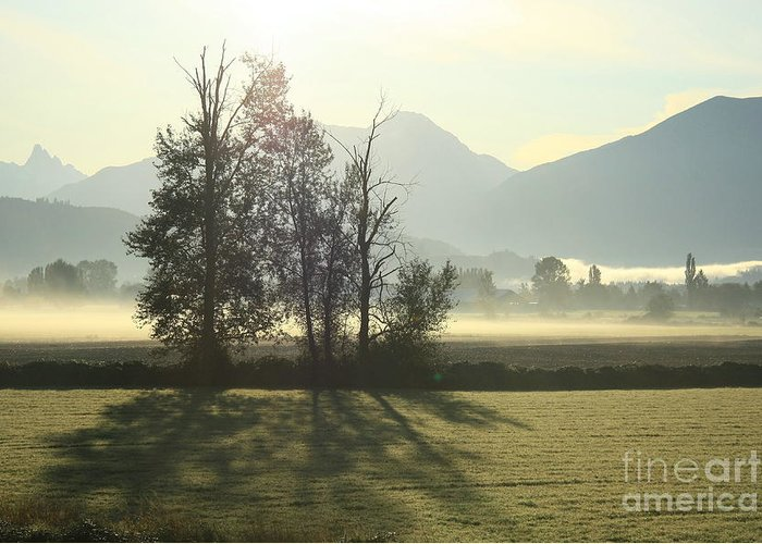 Morning Greeting Card featuring the photograph Morning Shadows by Frank Townsley