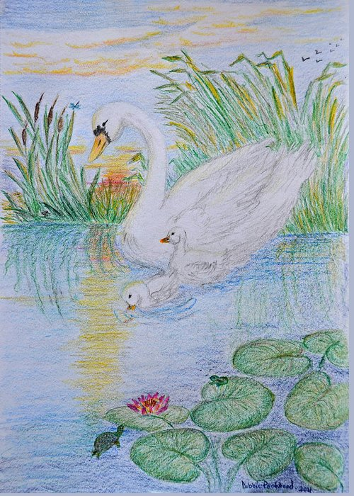 Lilly Pad Drawings Greeting Cards