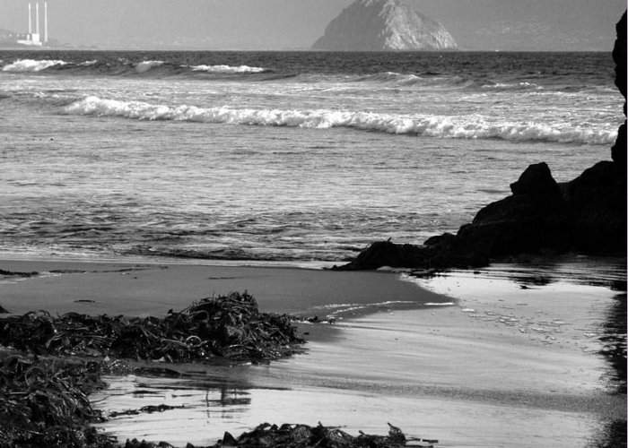 Ocean Greeting Card featuring the photograph Morro Bay Shoreline V by Steven Ainsworth