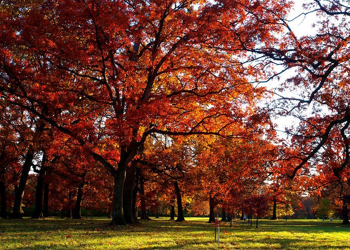Arboretum Greeting Card featuring the photograph Morton Arboretum In Colorful Fall by Paul Ge