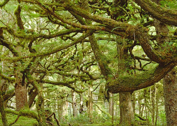 Botany Greeting Card featuring the photograph Moss-covered Trees by David Nunuk