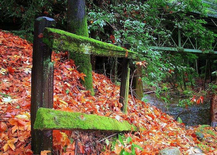 Big Sur Greeting Card featuring the photograph Mossy Fence by Rick Mutaw