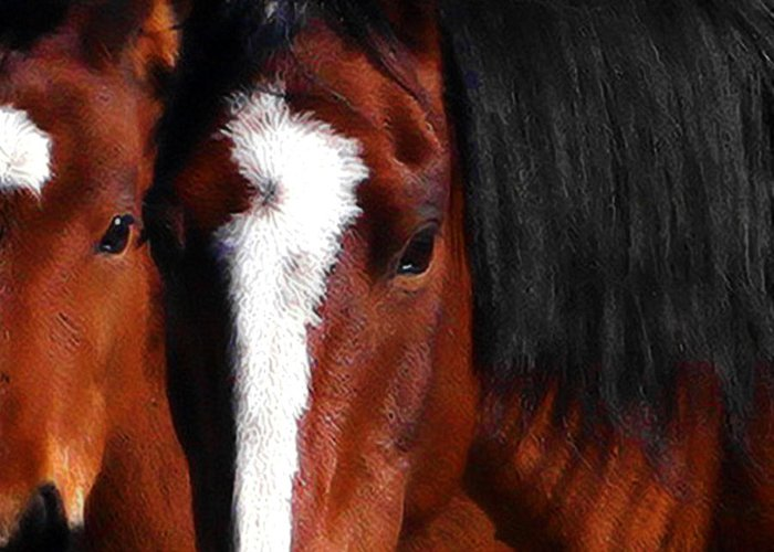 Horse Greeting Card featuring the photograph Mother And Son Wild by Terry Fiala