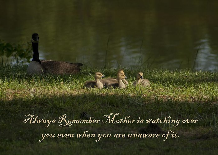 Mother Greeting Card featuring the photograph Mother's Watchful Eye by Kathy Clark