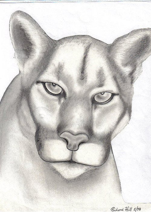 Portraits Greeting Card featuring the drawing Mountain Lion by Rick Hill
