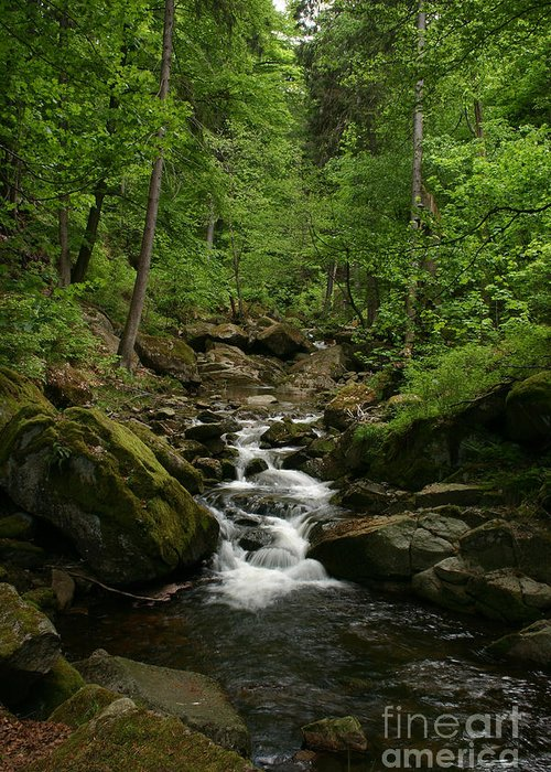 Brook Greeting Card featuring the photograph Mountain Stream by Torsten Dietrich