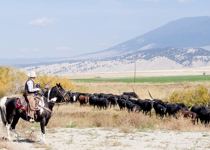 Cowboy Greeting Card featuring the photograph Moving The Herd by Fran Riley