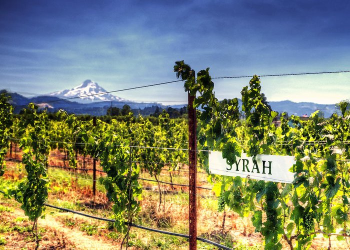 Mt Hood Greeting Card featuring the photograph Mt Hood Winery by Vicki Jauron