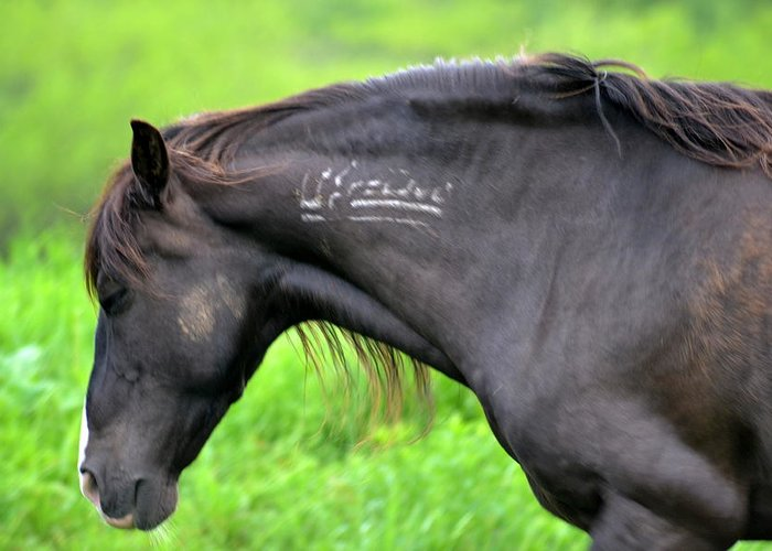 Horses Greeting Card featuring the photograph Mustang by Lisa Jaworski