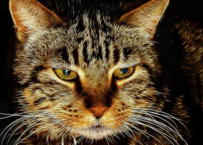 Meow Meow Greeting Card featuring the digital art My Bored Cat by Mariola Bitner