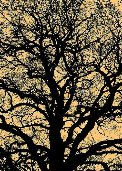 Sonne Greeting Card featuring the photograph My Friend - The Tree ... by Juergen Weiss