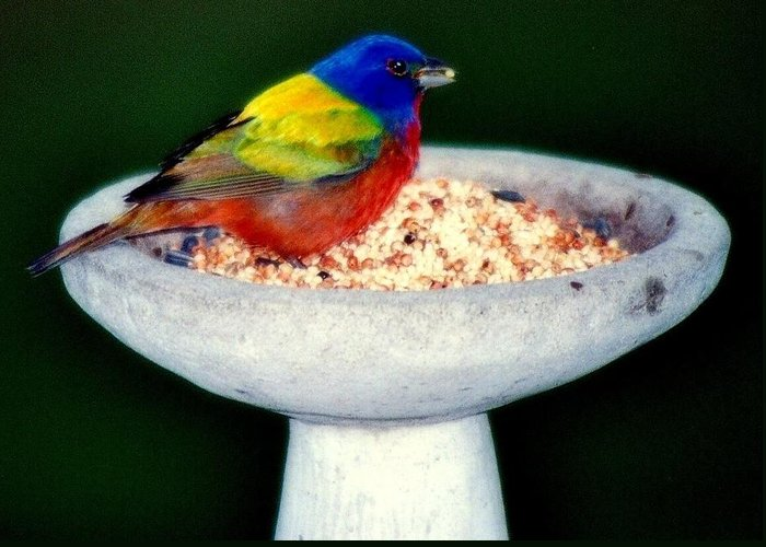 Birds Greeting Card featuring the photograph My Painted Bunting by Karen Wiles