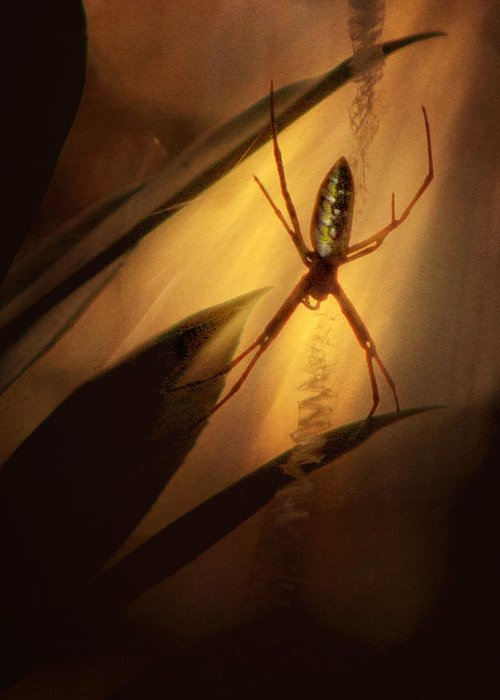 Spider Greeting Card featuring the photograph My Parlour by Amy Tyler