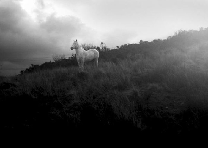 Horse Greeting Card featuring the photograph Mystic Horse by Gareth Tanner