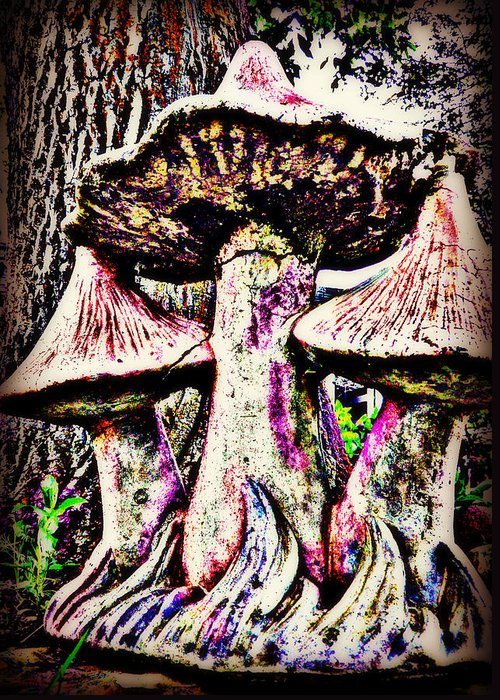 Mushrooms Greeting Card featuring the photograph Mystic Mushrooms by Corrie Knerr