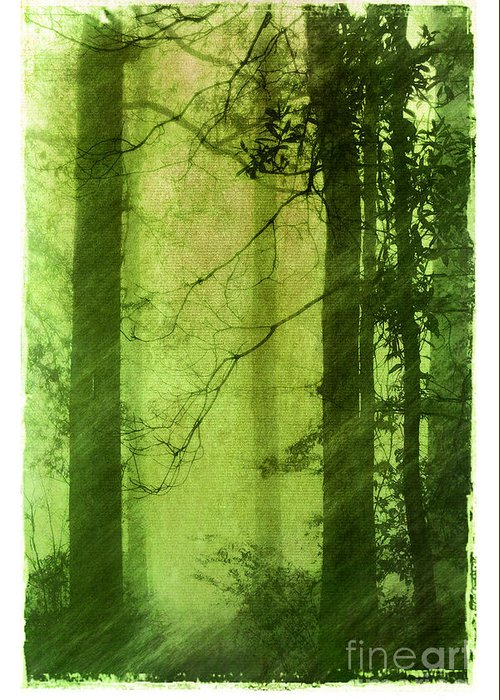 Green Greeting Card featuring the photograph Mystical Glade by Judi Bagwell