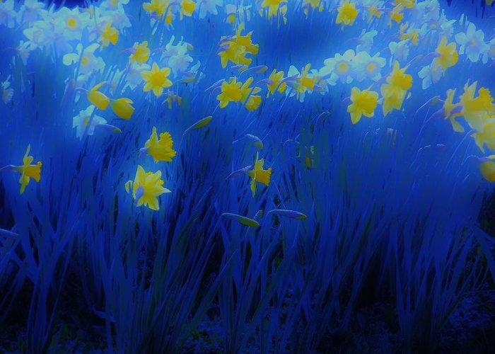 Narcisos Greeting Card featuring the photograph Narcisos by Xoanxo Cespon