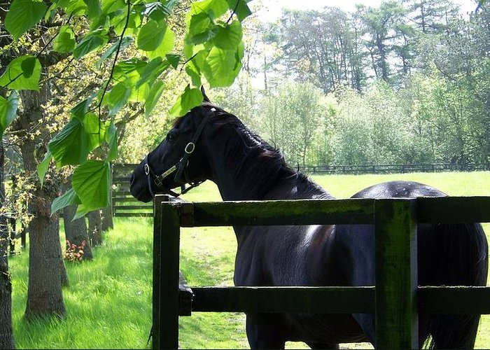 Ireland Greeting Card featuring the photograph National Stud Farm Ireland by Cathryn Brown