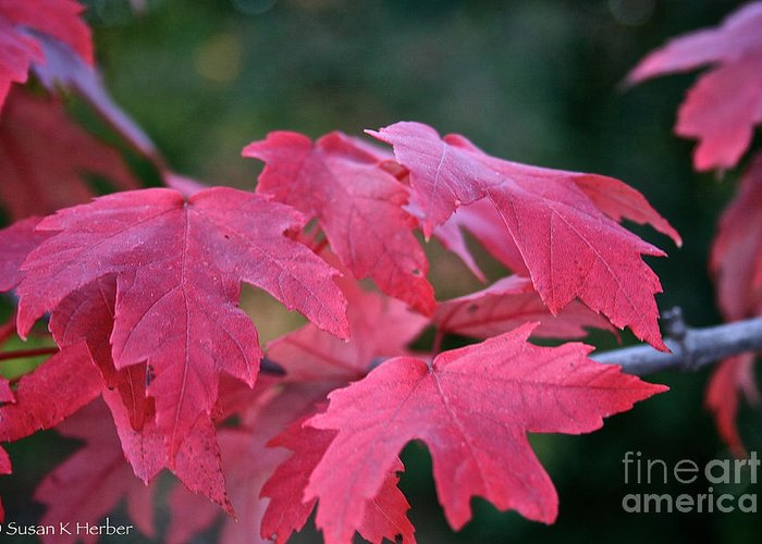 Outdoors Greeting Card featuring the photograph Naturally Vibrant by Susan Herber