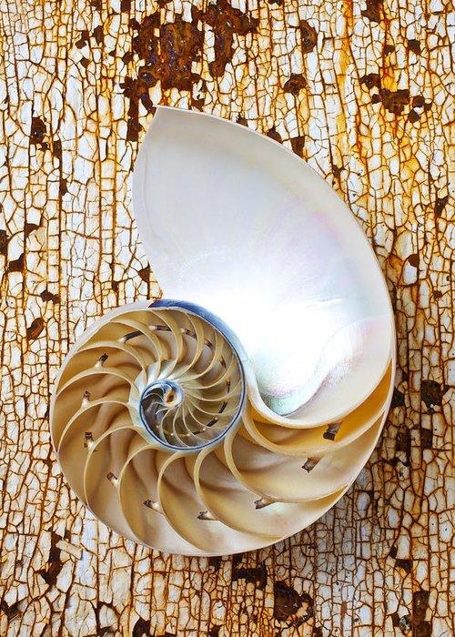 Nautilus Shell Greeting Card featuring the photograph Nautilus Shell On Rusty Table by Garry Gay