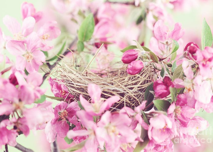 Nest Greeting Card featuring the photograph Nest In Soft Pink by Stephanie Frey