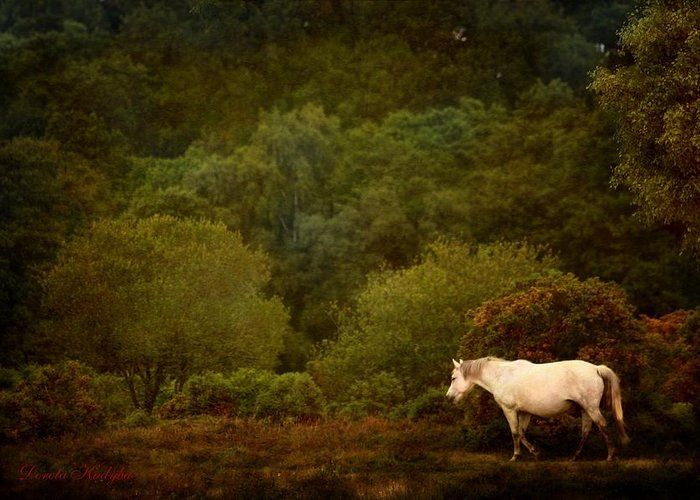 New Forest Pony Greeting Cards