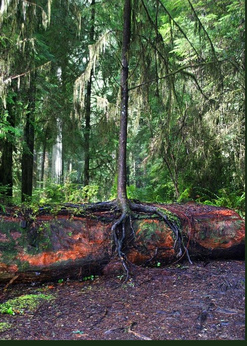 Redwood Greeting Card featuring the photograph New Growth by Anthony Jones