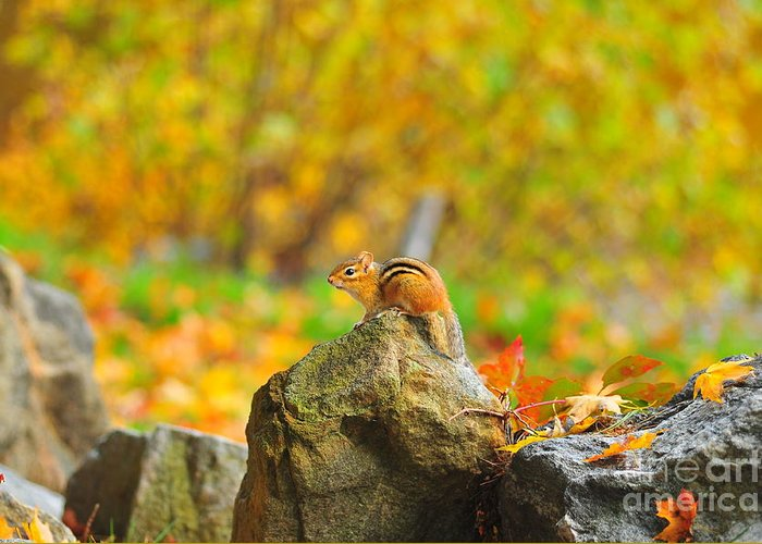Chipmunk Greeting Card featuring the photograph New Hampshire Chipmunk by Catherine Reusch Daley
