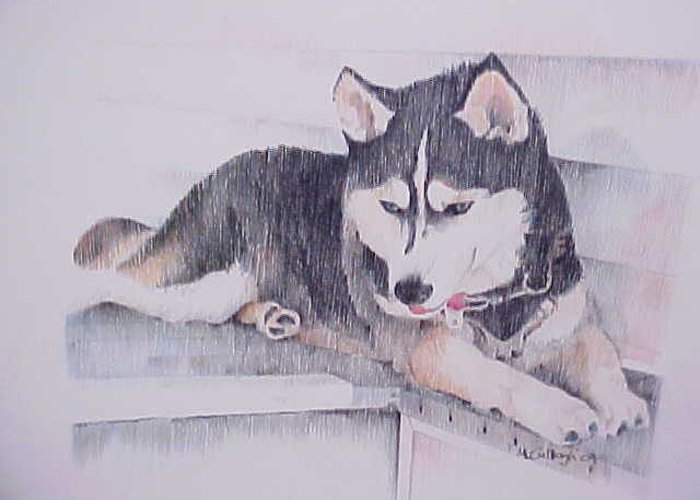 Husky Dogs Color Pencil Greeting Card featuring the drawing Nikki by William McCullagh
