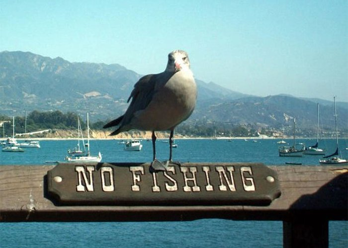 No Fishing Greeting Card featuring the digital art No Fishing by Jean Paul LeBlanc