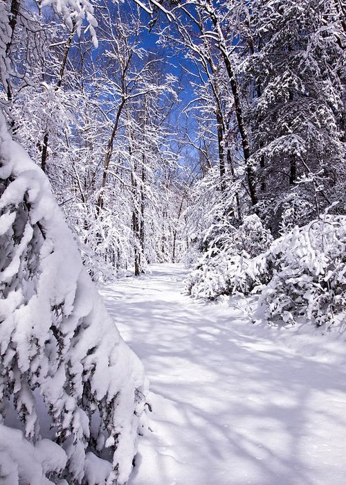 Forest Paths Greeting Card featuring the photograph No Footprints by Rob Travis