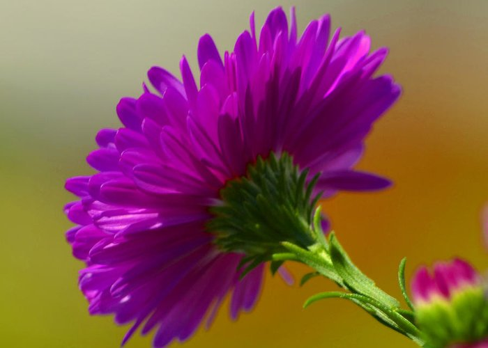 Flower Greeting Card featuring the photograph No Reason by Melanie Moraga