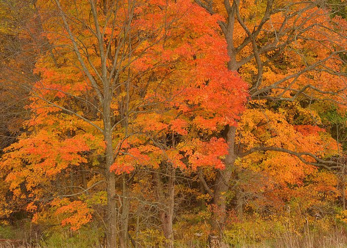 Vivid Colors Of Autumn - The Appalachian Trail Greeting Card featuring the photograph Northeast Fall Colors by Stephen Vecchiotti