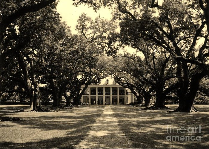 Plantation Greeting Card featuring the photograph Oak Alley Sepia by John Malone