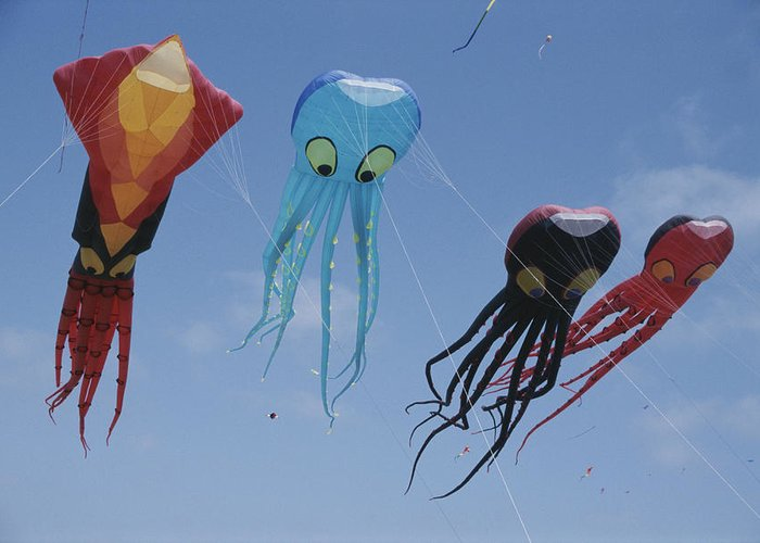 North America Greeting Card featuring the photograph Octopus And Squid-shaped Kites Fly by Stephen Sharnoff