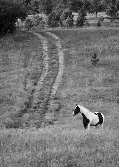 Black And White Horse Greeting Card featuring the photograph Off The Path by Amee Cave