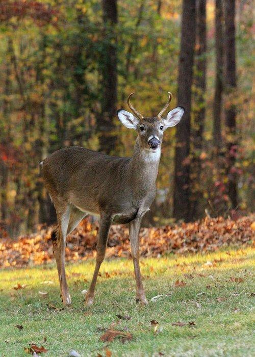 Deer Greeting Card featuring the photograph Oh Deer by Joe Myeress