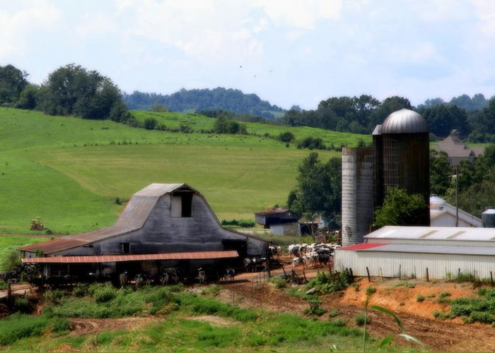 Barns Greeting Card featuring the photograph Old Dairy Barn by Karen Wiles